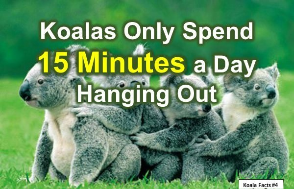 Fun Koala Facts for Kids: 10 Interesting Facts about Koala