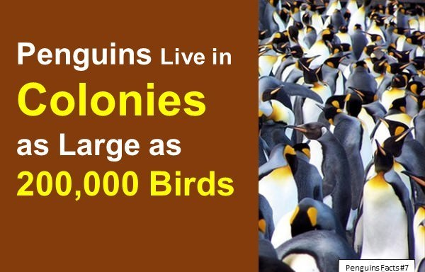 Penguin Facts for Kids: 10 Interesting Facts about Penguins