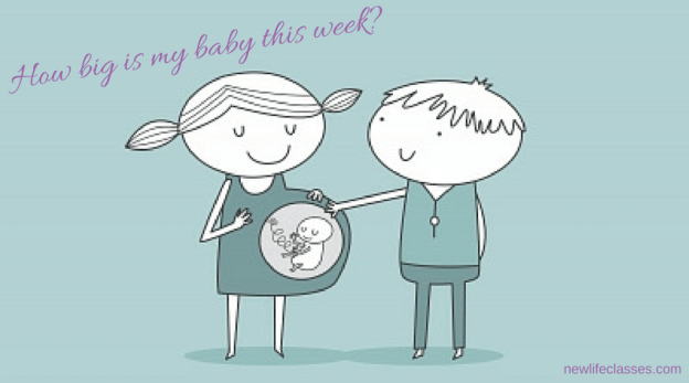 Image, how big is my baby this week?