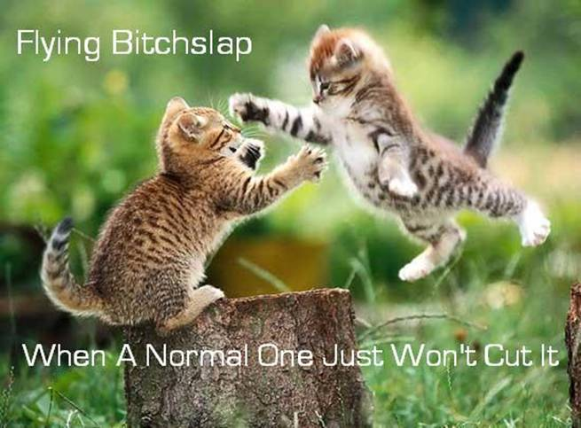 Image result for take that bitches lolcat