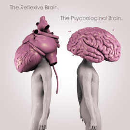 The Reflexive Brain