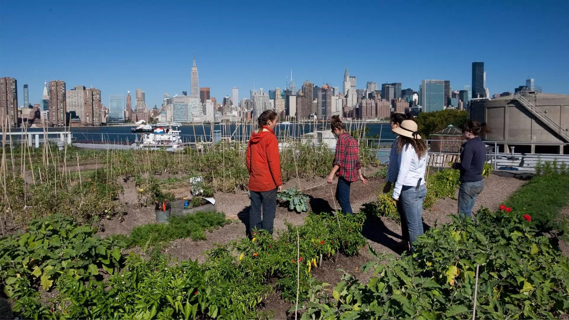 Five people work in a garden across the bay from the New York skyline.