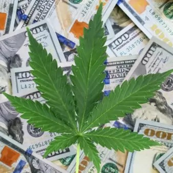A cannabis plant sitting on top of a pile of one hundred dollar bills