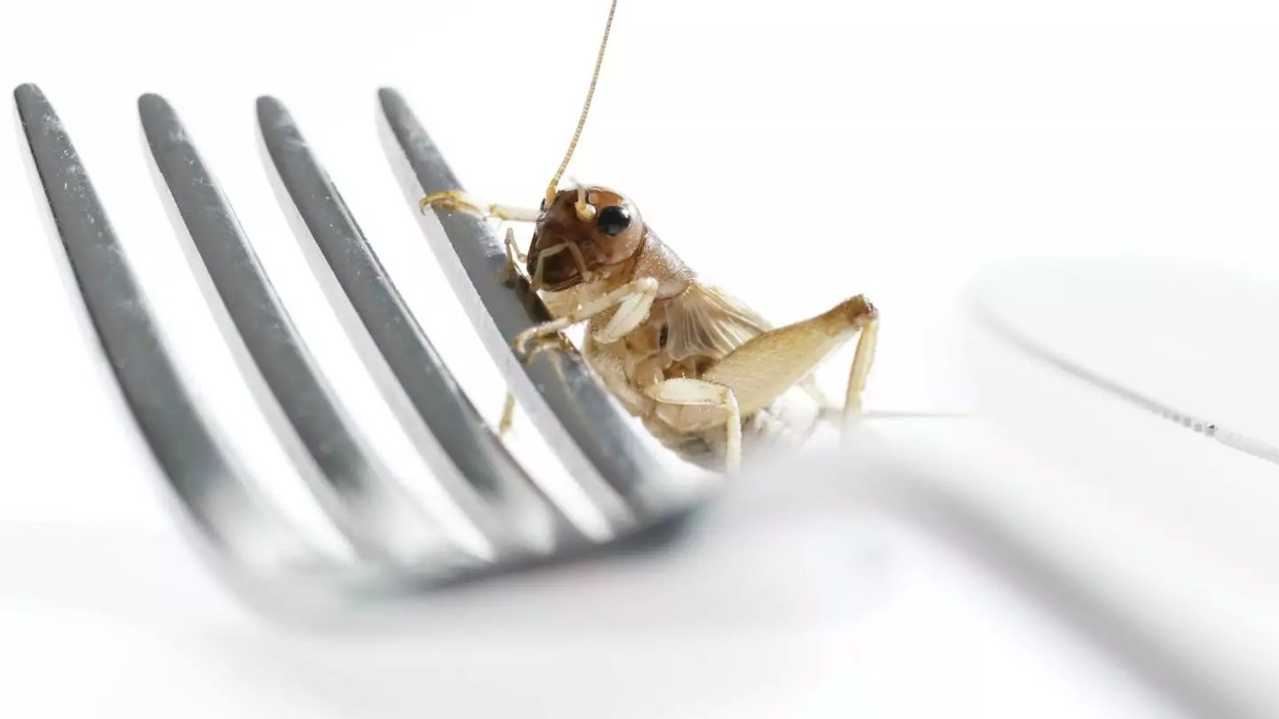 Close-up of a grasshopper perched on a metal fork.