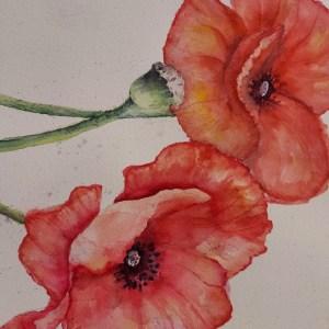 """""""Poppies"""" Susan McLaren New Moon Network"""
