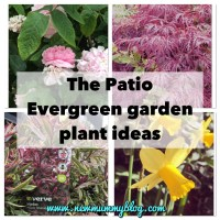 Evergreen border plant ideas | Garden plant ideas - 1