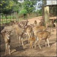Deer park at nabarangpur