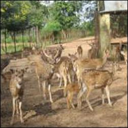 Nabarangpur Deer Park of Odisha