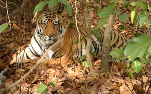 Top 5 Wildlife Sanctuaries in Odisha