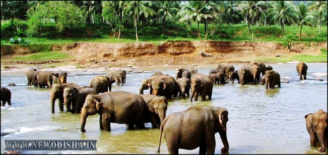 Chandaka Elephant Reserve Sanchuary