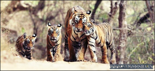 Simlipal National Park of Odisha