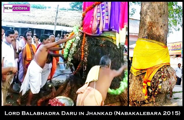 Lord Balabhadra Daru identified at Sarala Temple in Jhankada for Nabakalebara 2015