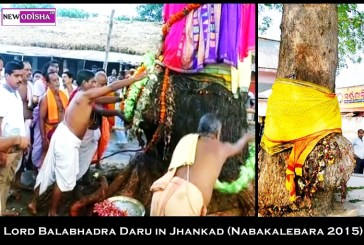 Lord Balabhadra Daru identified at Sarala Temple in Jhankada for Nabakalebara 2015