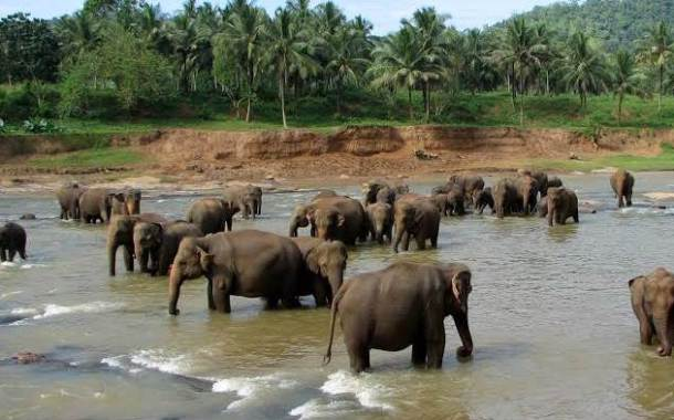 New Elephant Sanctuary To be Set Up In Odisha Soon