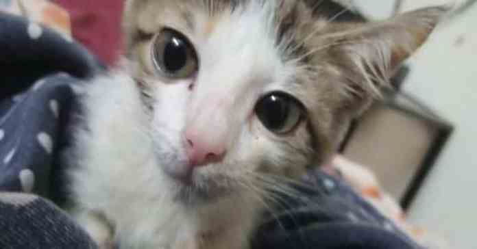 Innocent kitten raped by 15-year-old boy and his cousins in Lahore, Pakistan