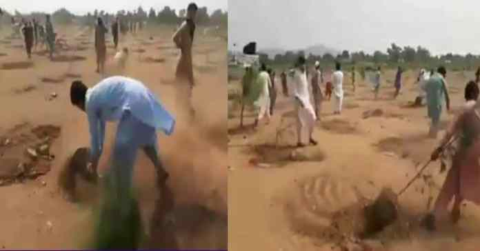Locals uprooted thousands of plants planted under billion tree tsunami campaign
