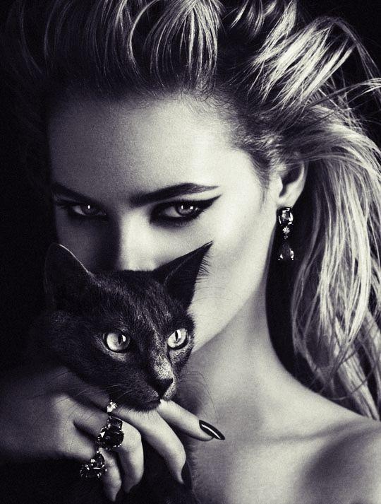 خلفيات قطط كيوت 2019 صور قطط للبنات رائعة 2020 فوتوجرافر