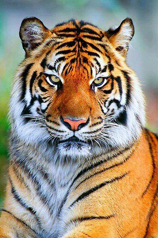 الحيوانات المفترسة احلى الصور حيوانات