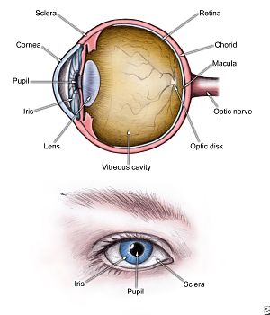 Newport Beach, CA lasik eye surgeon & Ophthalmologist for ...