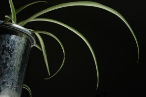 Black and Silver 300x199 25 Beautiful Indoor Plant Design Images