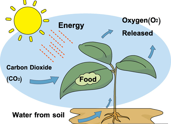Detailed Scientific Nitrogen Cycle Diagram An Introduction To Green Wall Lighting Newpro Blog