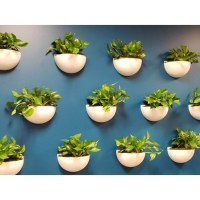 Walton Wall Sconce Planter - NewPro Containers