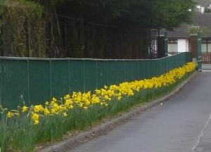 daffodils-300x216.jpg