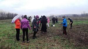 plantare copaci 16043