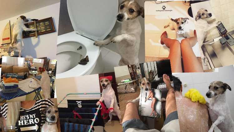 Бурная жизнь самого знаменитого пса Турции