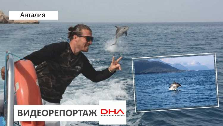 Туры с дельфинами набирают популярность в Кемере