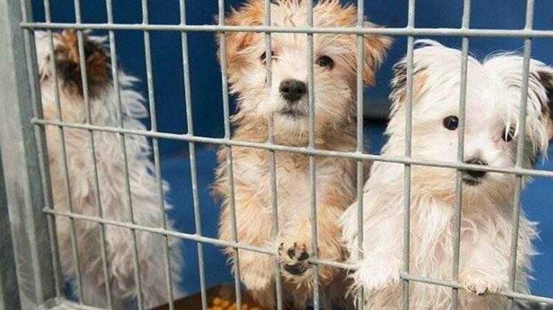 В Стамбуле запретили продажу домашних животных