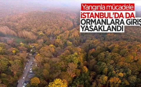 В 7 провинциях Турции запретили посещение лесов