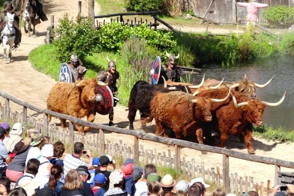vache-corne