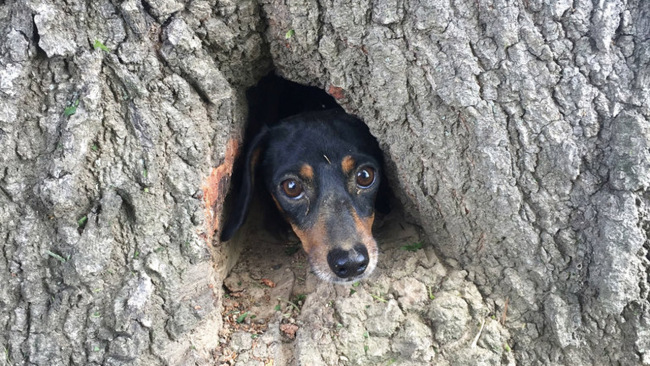 APTOPIX Dog Trapped in Tree_590410
