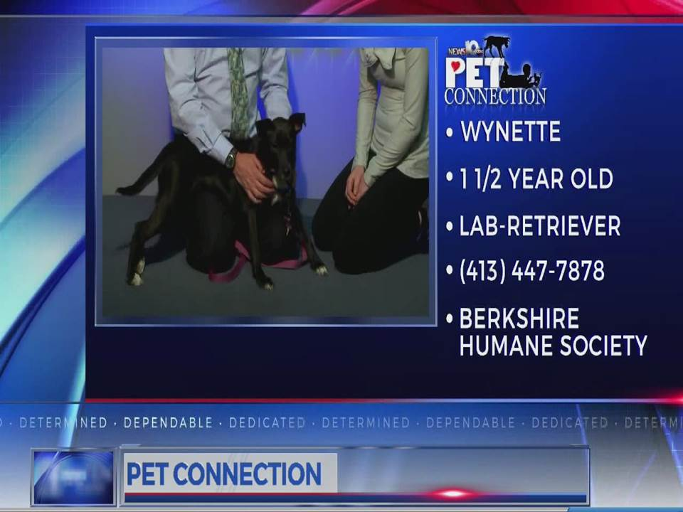 PET CONNECTION WYNETTE 3-14-18_712303