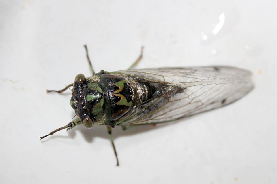 cicada_1528902421429