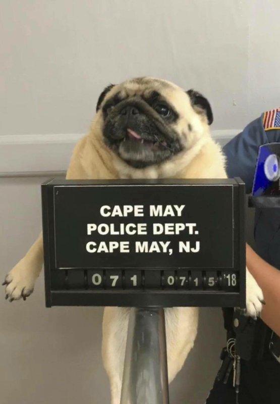 Police arrest dog _1531837549879