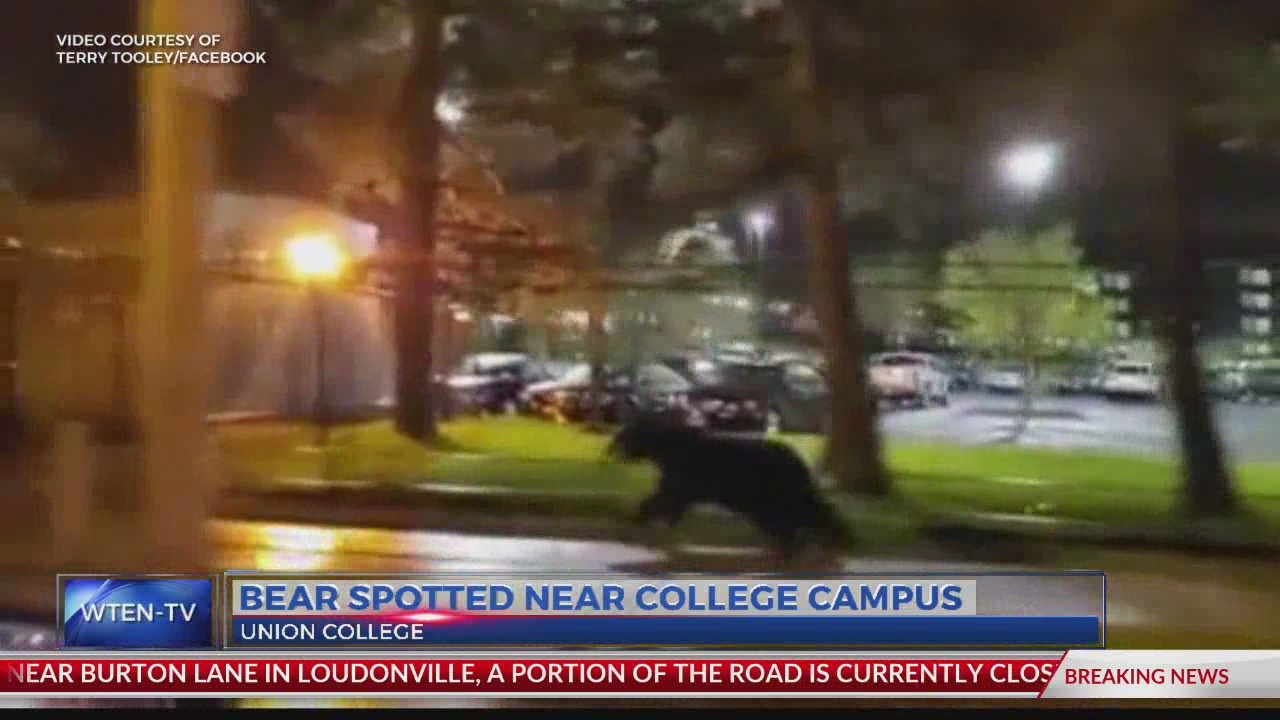 Bear spotted near Union College