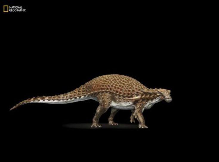 nodosaur3