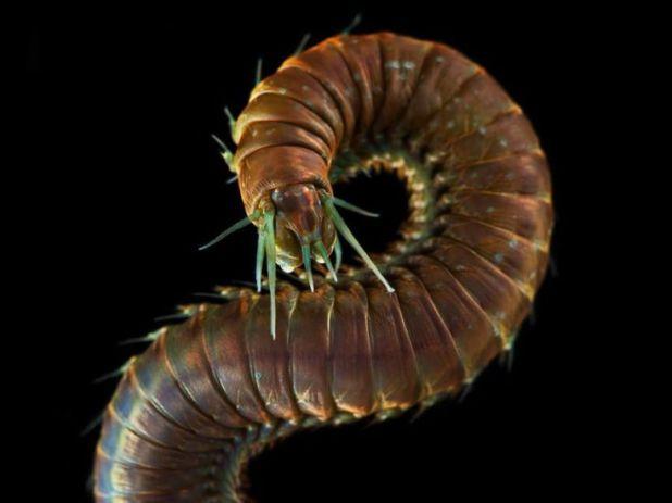 μικροοργανισμοί θάλασσα