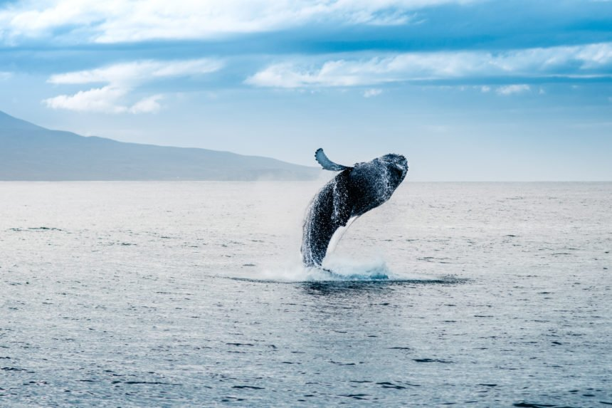 An Infamous Bitcoin Whale Just Resurfaced — and He's Got a Bone to Pick
