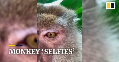 Malaysian man finds selfies of monkey trying to eat his stolen phone