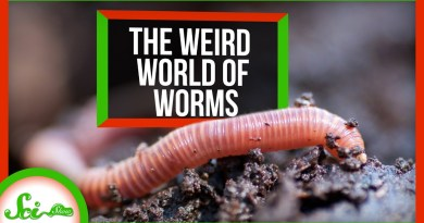 The Wild, Wiggly, Weird World of Worms | Compilation