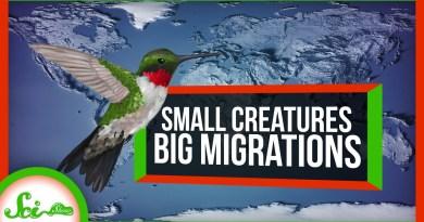 5 Tiny Animals With BIG Migrations