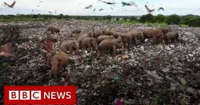 Sri Lanka digs trench to deter scavenging elephants – BBC News