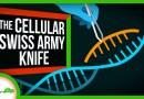 4 Ways CRISPR Is More Than Just Gene Editing
