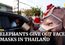 Elephants distribute face masks as Thailand sees Covid-19 surge