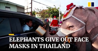Elephants distribute face masks as Thailand sees Covid-19 surge