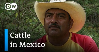 Mexico: Sustainable farms for biodiversity | Global Ideas