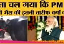 PM Narendra Modi ने Kutch में जिस Banni buffalo की तारीफ की, वो वाकई बेहद शानदार Breed है